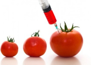 alimentos-transgenicos1-418x300